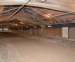 agricultural spray foam in poultry barn